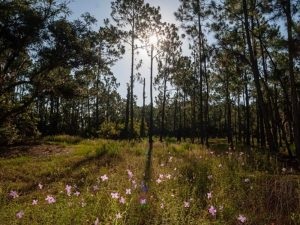 florida crosby island marsh preserve